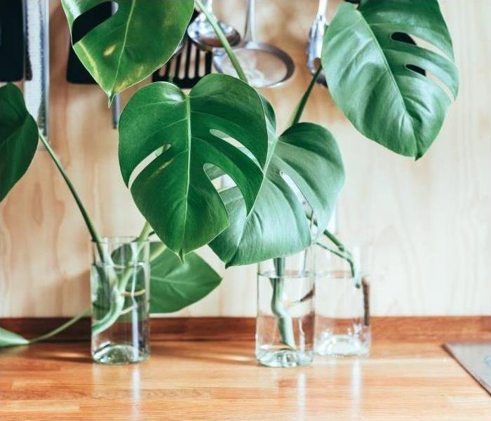 General Plants and Indoor Air Quality