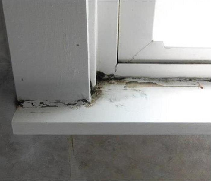 Mold Remediation Limit Winter Mold Growth in your Home